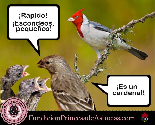 Gallota Cardenal Nido Pollitos
